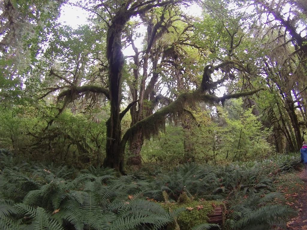 20150923 Hoo Rainforest  (26)