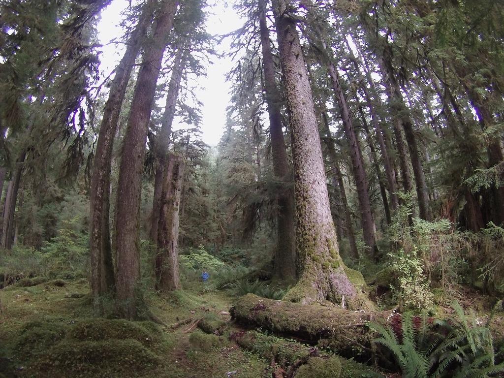 20150923 Hoo Rainforest  (39)